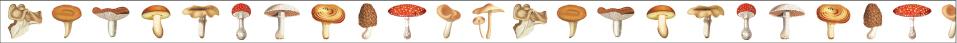 mushroom (15mm)